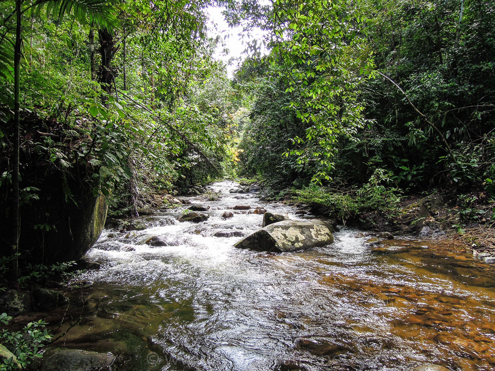 River in the forest - see orangutan and meet dayak people in kalimantan