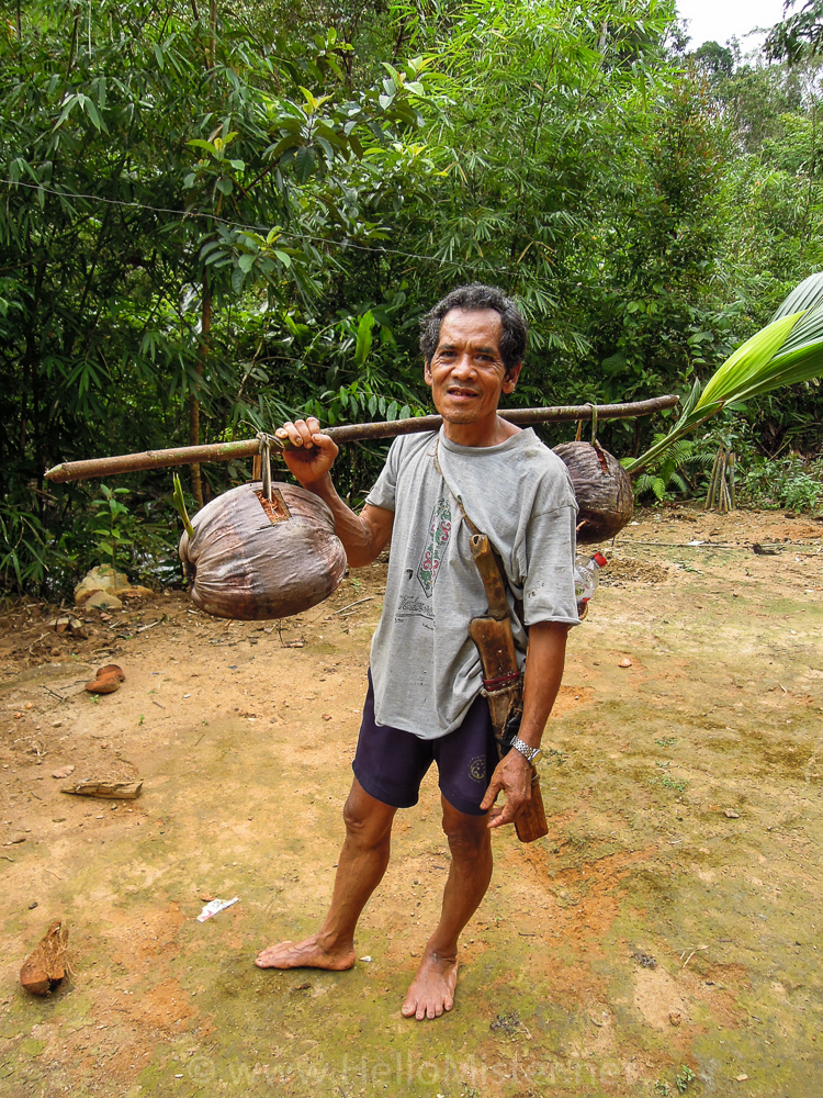 Local returns from trek with coconuts - see orangutan and meet dayak people in kalimantan