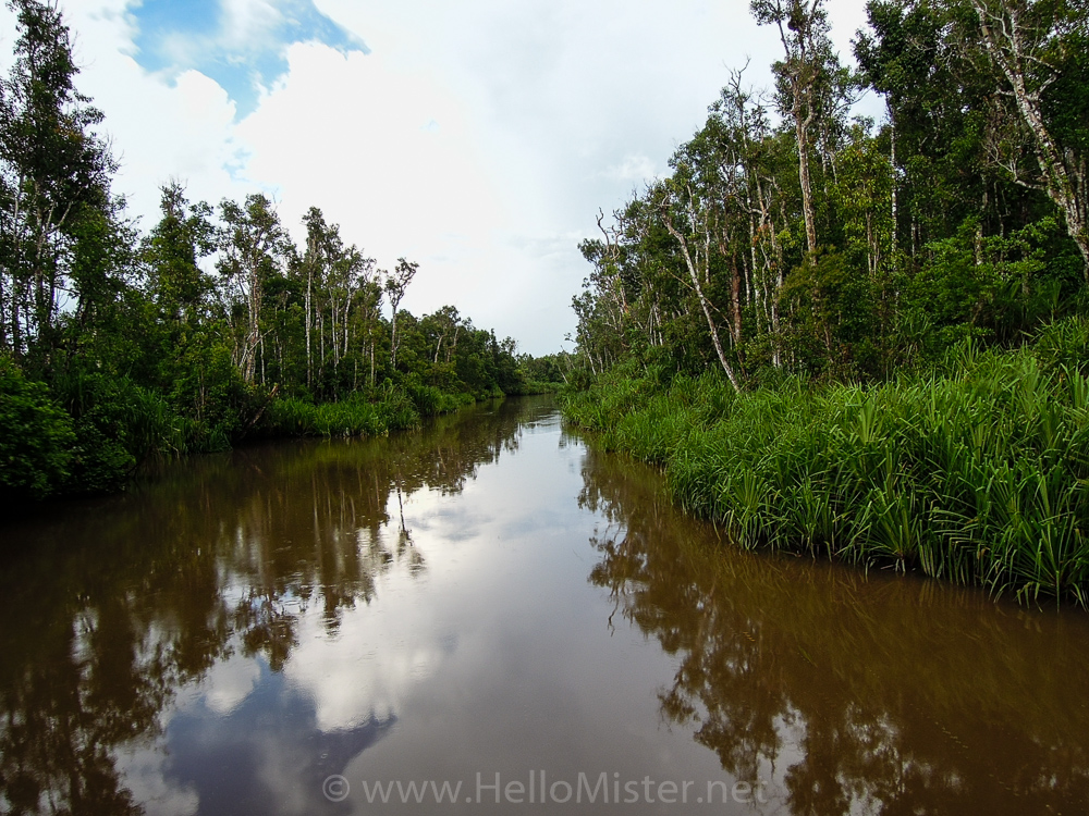 Travel up river to Camp Leakey - see orangutan and meet dayak people in kalimantan