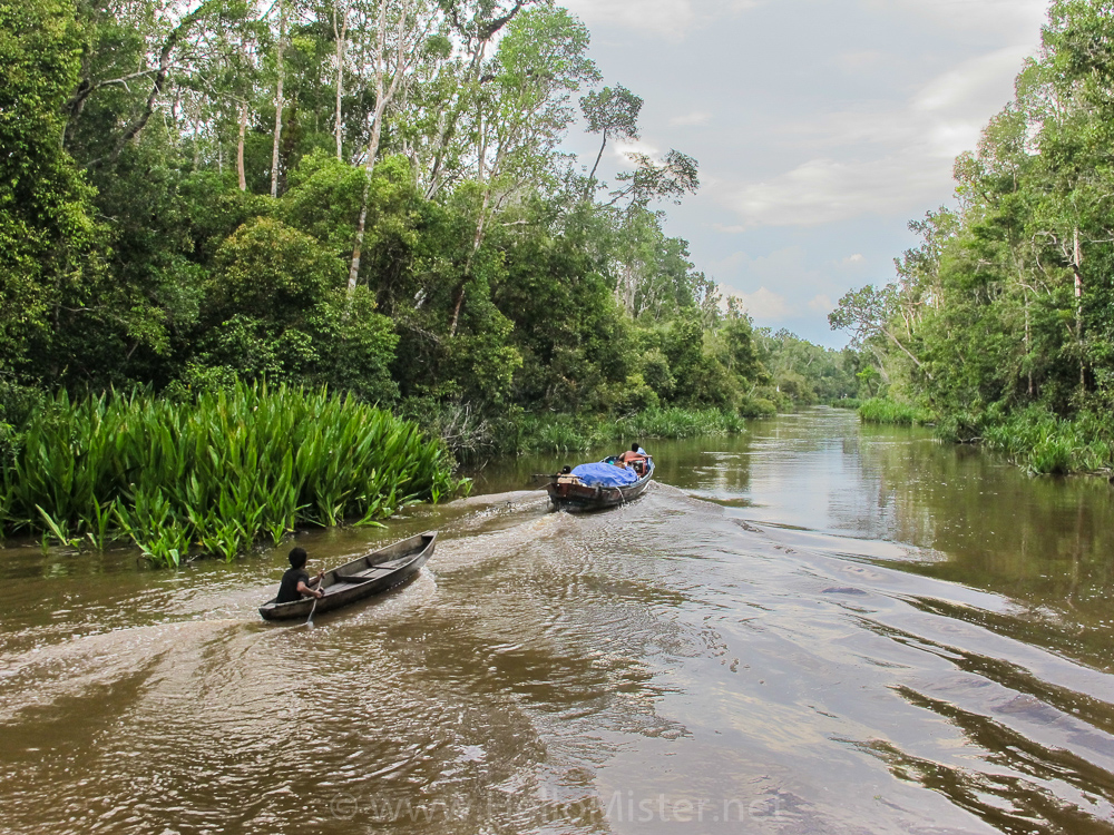 River transport by canoe - see orangutan and meet dayak people in kalimantan