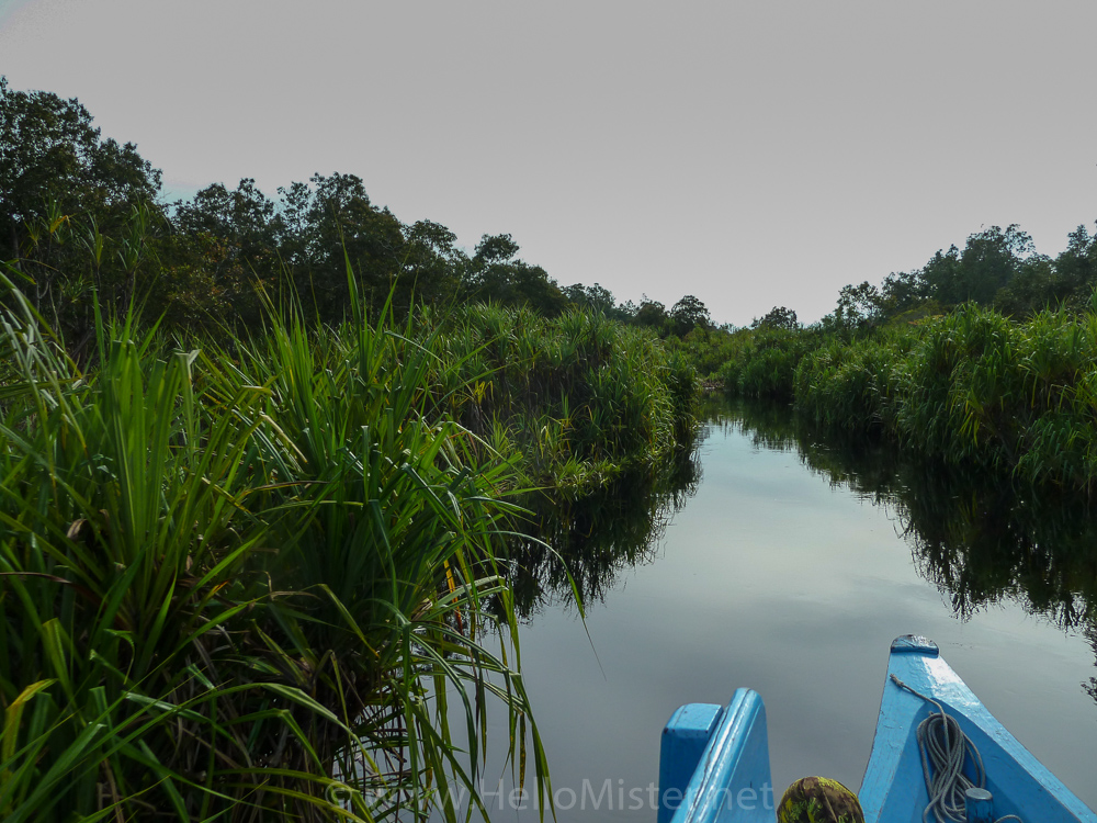 'Coca-cola' river - see orangutan and meet dayak people in kalimantan