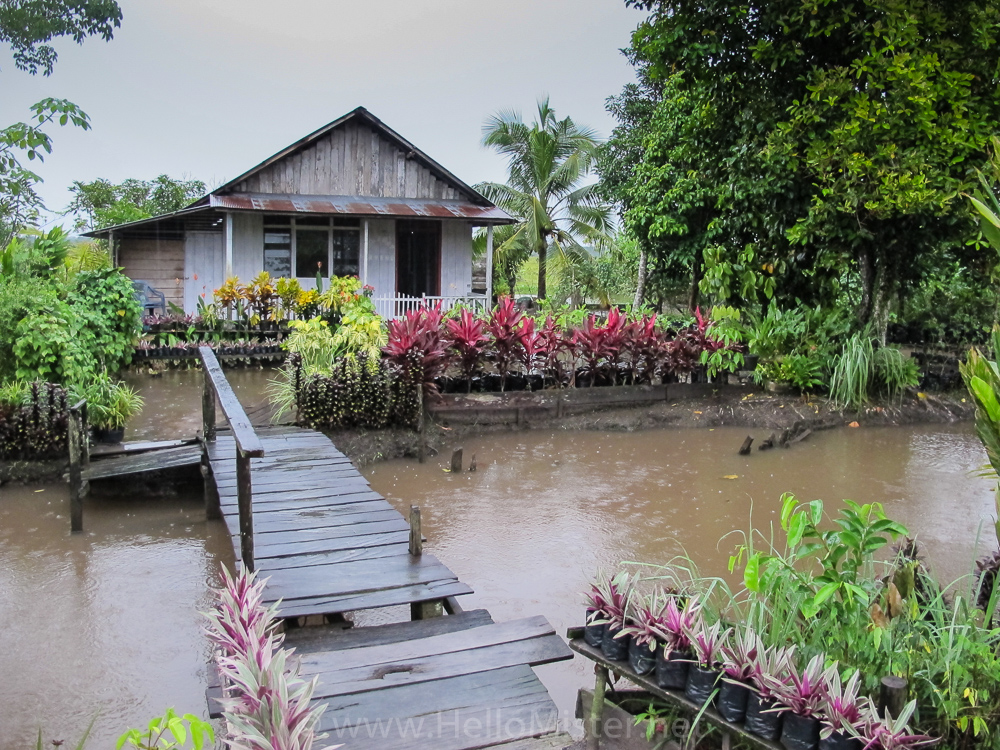 House and water garden in Tanjung Puting - see orangutan and meet dayak people in kalimantan