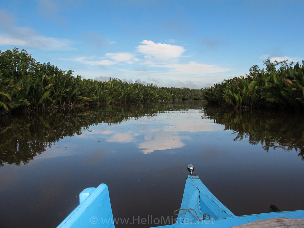 Heading downriver to Kumai - see orangutan and meet dayak people in kalimantan