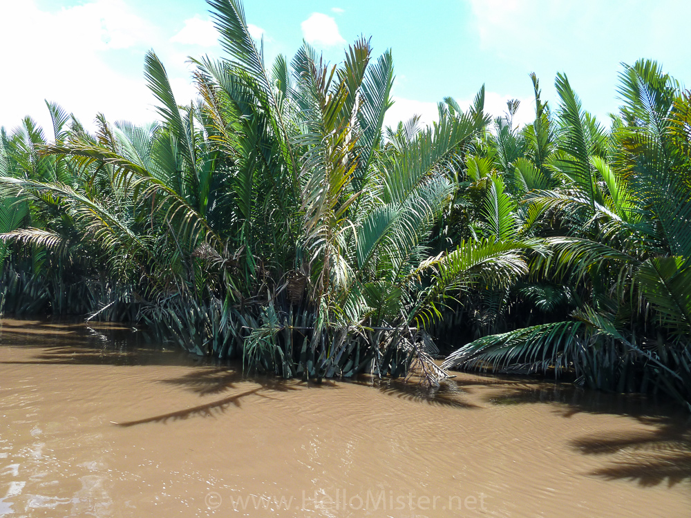 Nipi palms line the river - see orangutan and meet dayak people in kalimantan