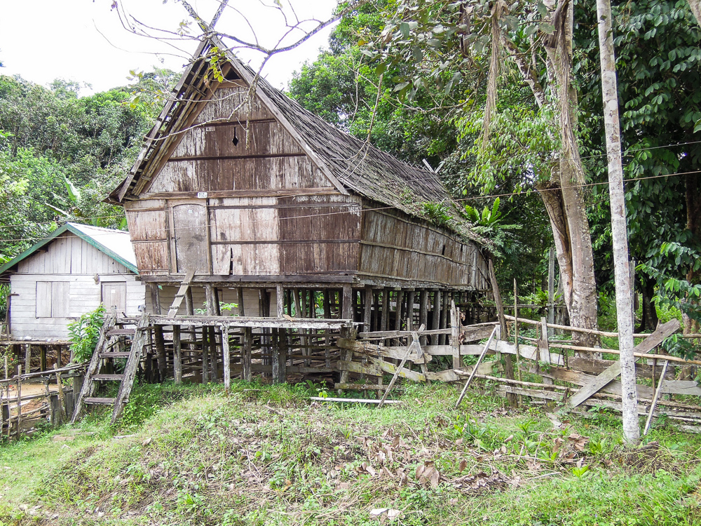 Dayak longhouse in Kalimantan - see orangutan and meet dayak people in kalimantan