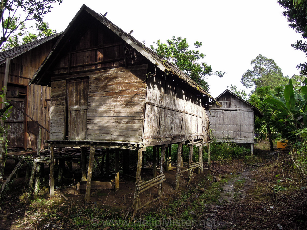 Kundangan houses - see orangutan and meet dayak people in kalimantan