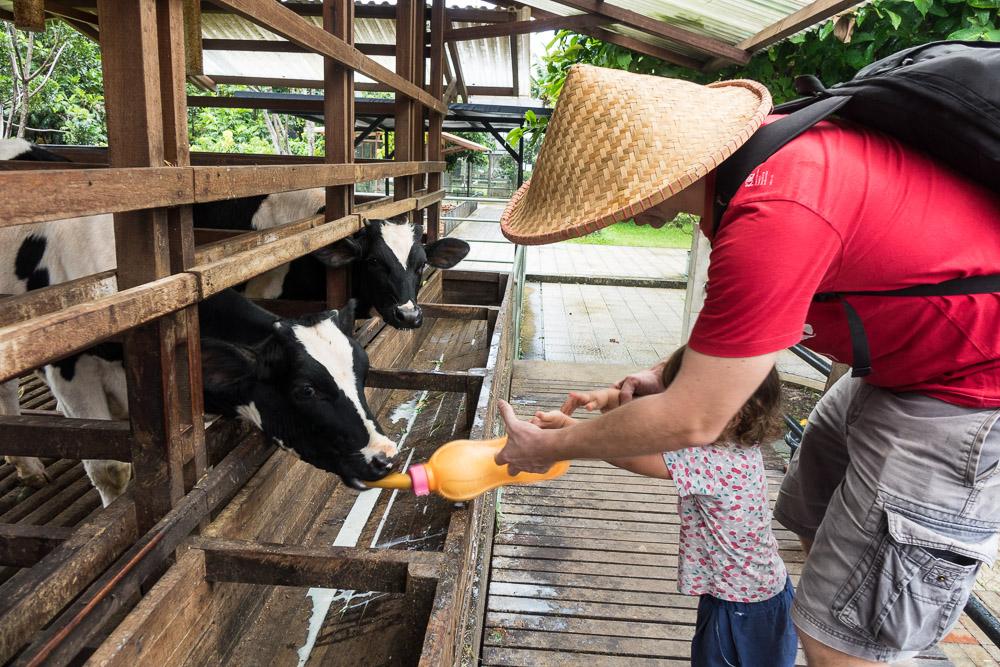 Don't drop the bottle - Day trip to Kuntum Farmfield in Bogor