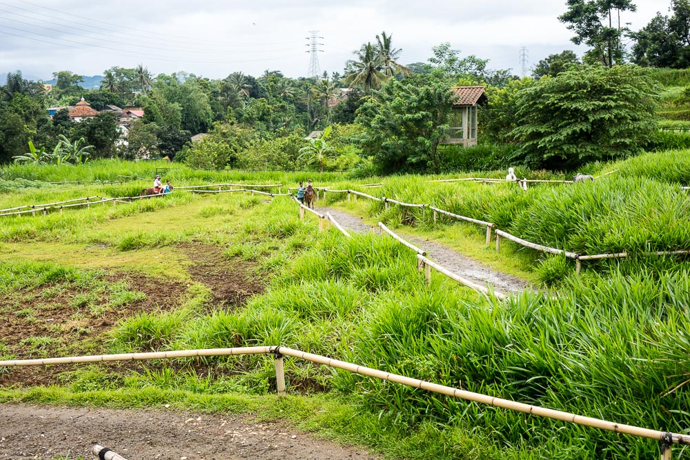 The horse circuit - Day trip to Kuntum Farmfield in Bogor