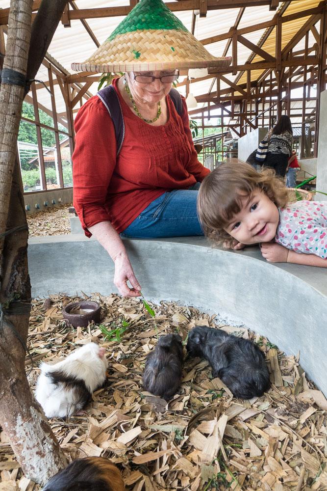 Feeding the animals - Day trip to Kuntum Farmfield in Bogor