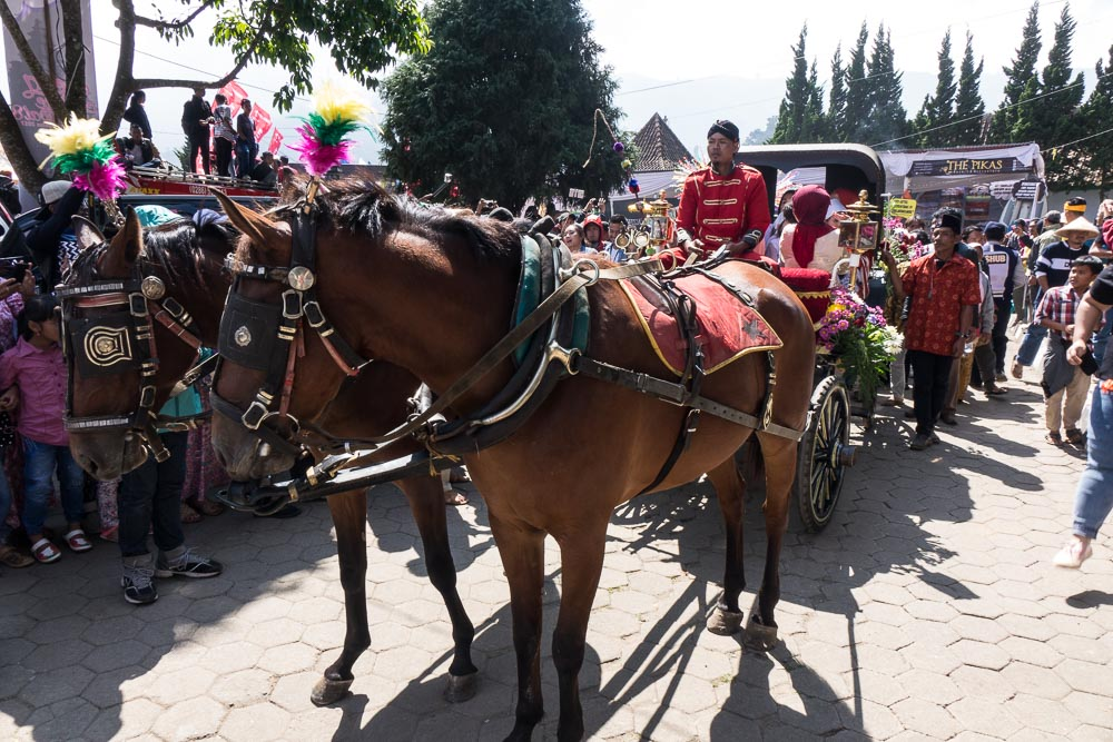 Horses are tradtional - Dieng Culture Festival