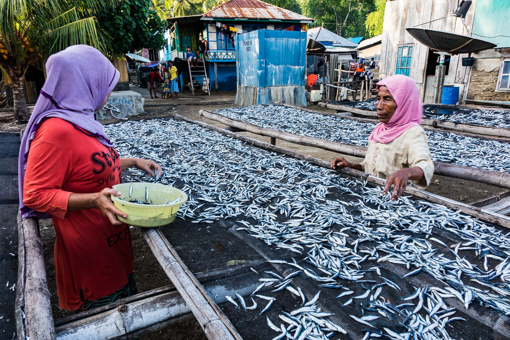 Sorting and drying the fish - Komodo Island Adventure